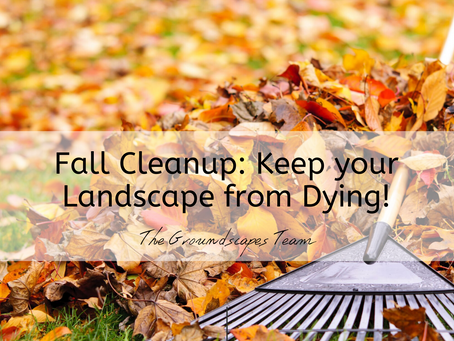 Fall Cleanup: Keep Your Landscape from Dying!