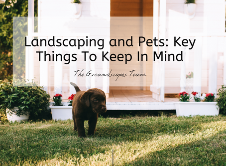 Landscaping and Pets: Key Things To Keep In Mind