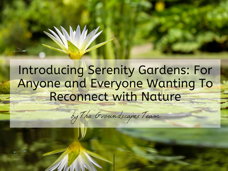 Introducing Serenity Gardens: For Anyone and Everyone Wanting To Reconnect with Nature