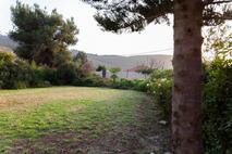 דשא_אחורי_עם_עץ_בגינה.jpg