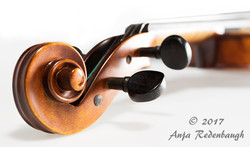 violin_Panorama1