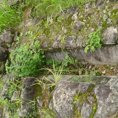 Ruinas da Fazenda da Mandioca 2.jpg