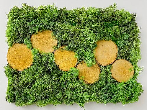 Żywy obraz A4 z 6 plastrami drewna