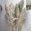 Thumbnail: Herbes de Pampa naturelles