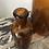 Thumbnail: Trio de vases ambrés