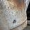 Thumbnail: Arrosoir en zinc