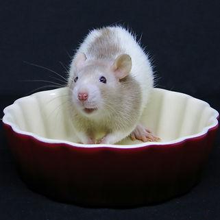 Rats Julies 11 (1 of 1).jpg