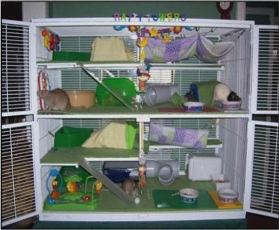 wendy's cage.jpg