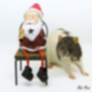 xmas Tex Rat Pics AusRFS.jpg