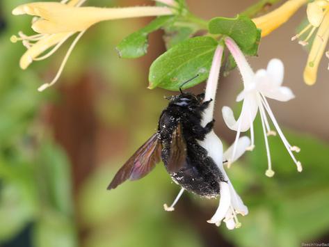 The Accidental Pollinator