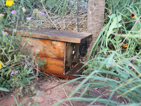 How to make a bumble bee house