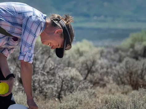 What native bees live in northern New Mexico? New bee inventory sheds light