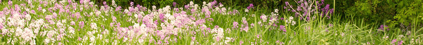 gba-flowers-meadow2.jpg