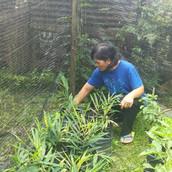 Farming Project Photo (92).jpg