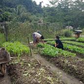 Farming Project Photo (86).jpg