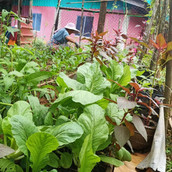 Farming Project Photo (99).jpg