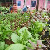 Farming Project Photo (97).jpg