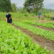 Farming Project Photo (84).jpg