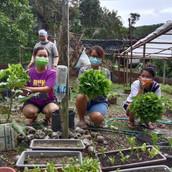 Farming Project Photo (104).jpg