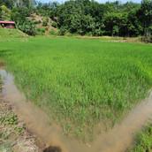 Farming Project Photo (103).jpg