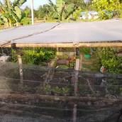 Farming Project Photo (122).jpg