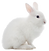 white%20rabbit_edited.png
