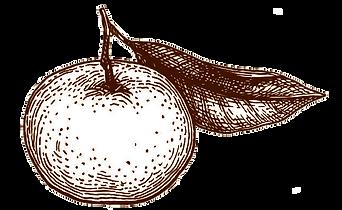 taronja-sipia.png