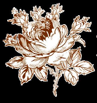 rosa.png