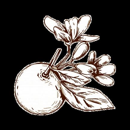 mandarina-sipia2.png