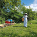 Starting with apiculture