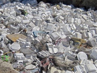 Top 10 Reasons Why Switching from Styrofoam to Bio-Friendly Containers will Improve Your Restaurant