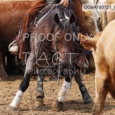 OCHA 5000 Novice Horse Division