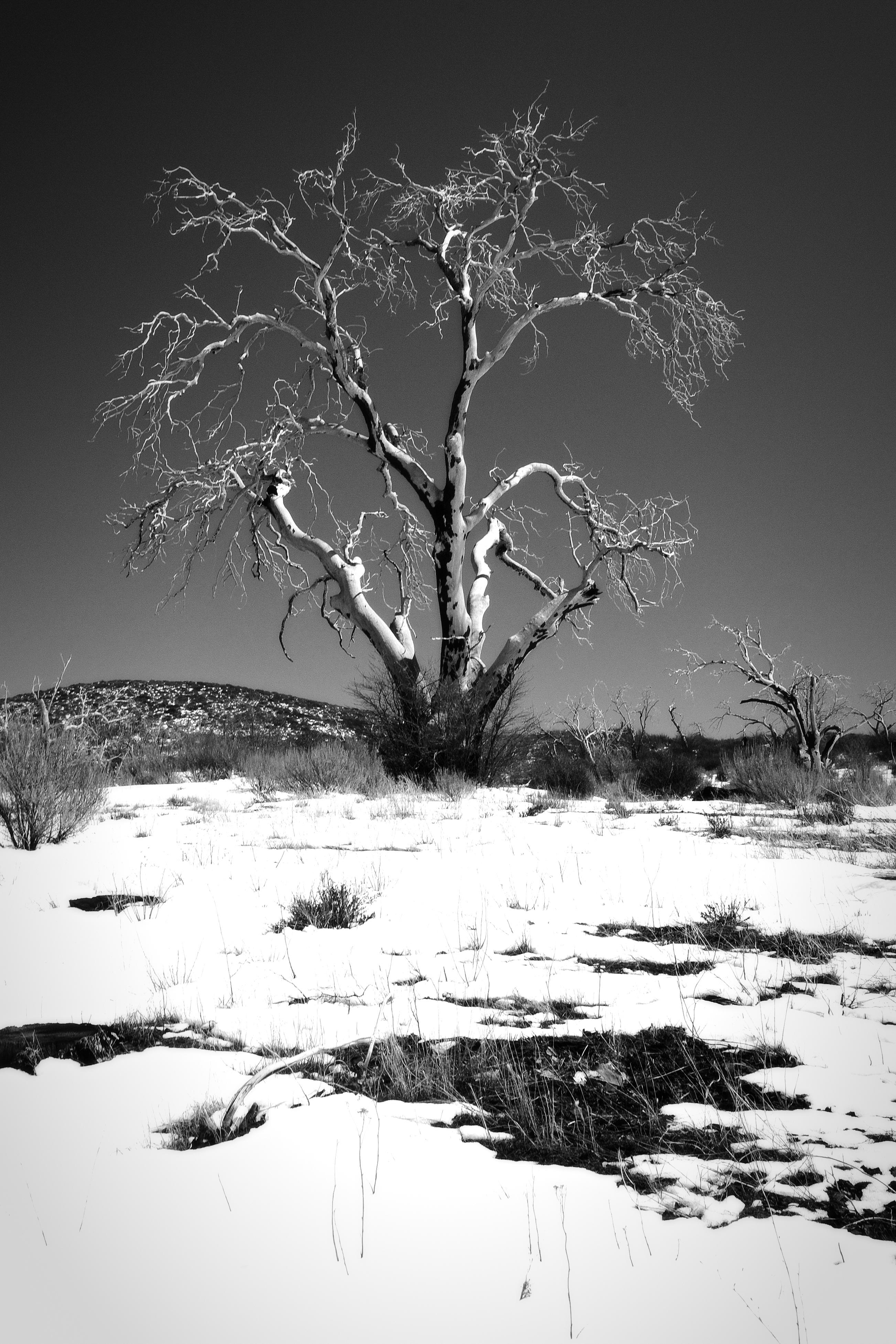 Burnt Tree (DSC_4519BW.jpg)