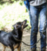 Oakland dog walking, East Bay dog walking, pet sitting