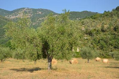 Aceite de oliva, vinagre balsámico, aceite de trufa blanca