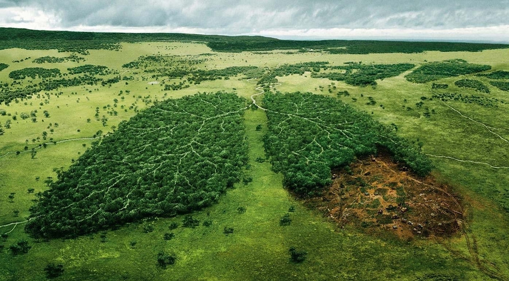 amazon lungs of world