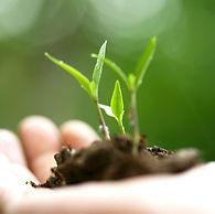 cultivation.jpg