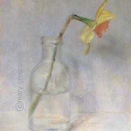 Jonquille (Daffodil)