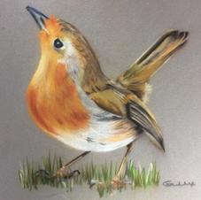 Barratt 'Robin 2'