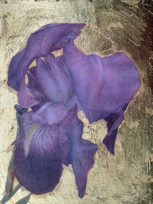 'Bearded Iris' Impression Giclée