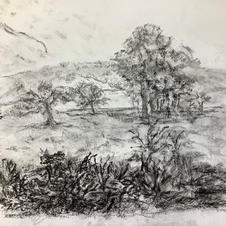 Drawing the Landscape