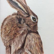 Barratt 'Rabbit'