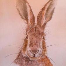 "Barratt 'Sunday Morning Hare' 6x4"""