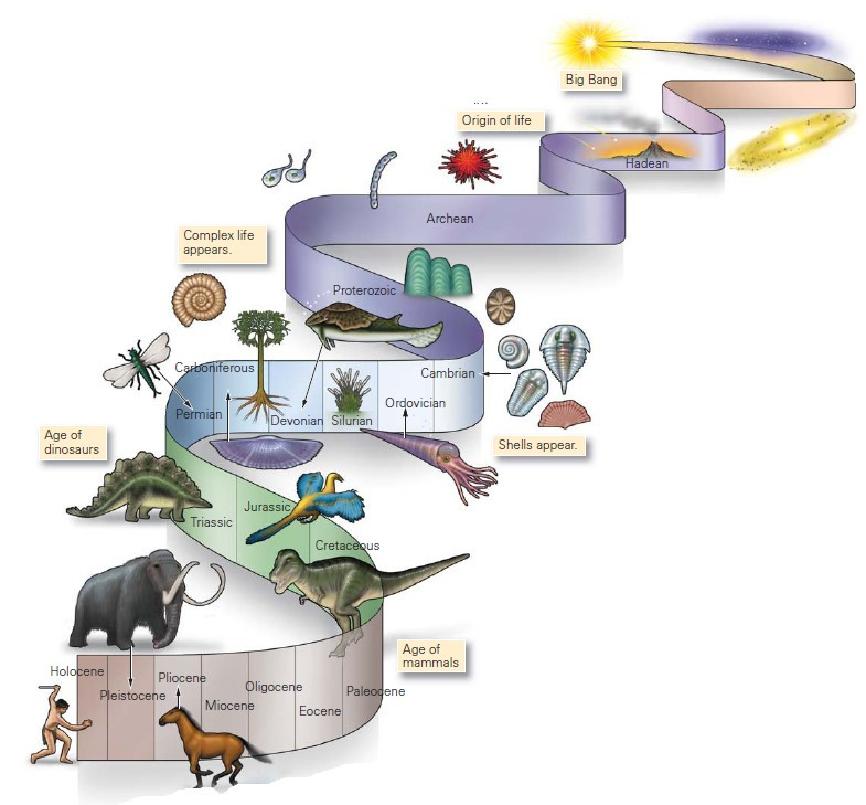 Evolution on the Earth. Geology. Earth Science.