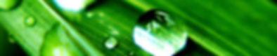 green_facial1.jpg
