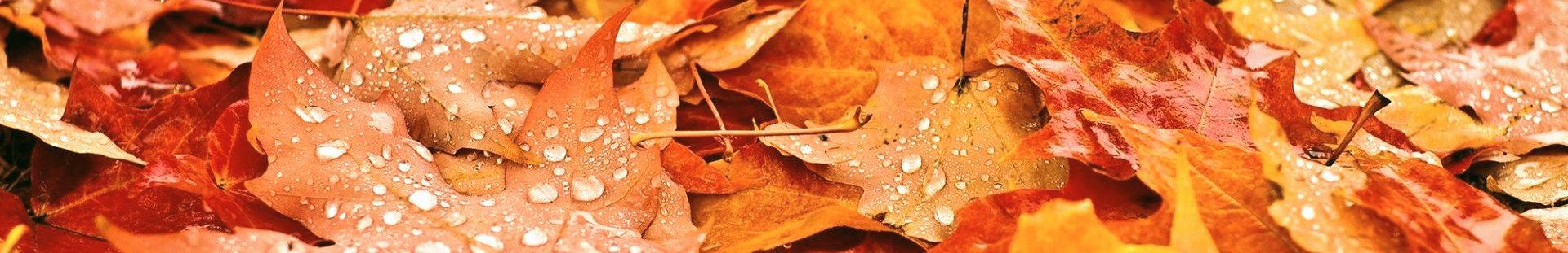fall_2019_edited.jpg