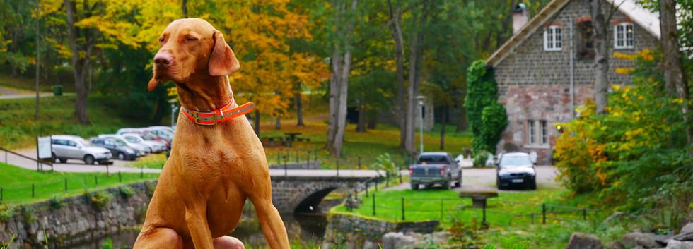 Hundar är också välkomna till Kungskvarnen