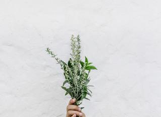 自粛中に植えた植物たちの近況と共に…