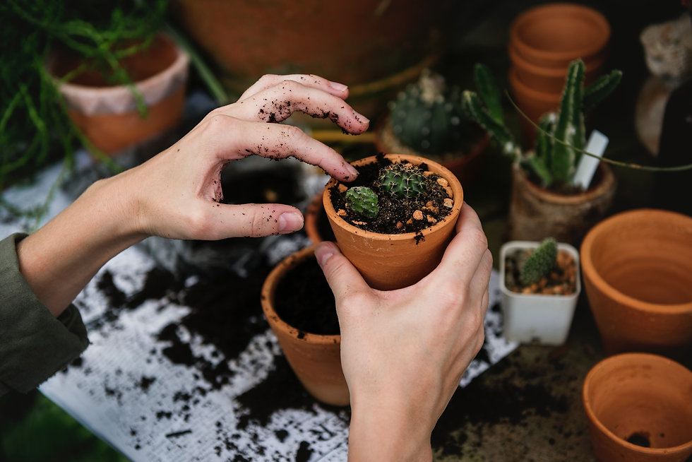 Gardening-hands-unsplash-rawpixel_edited.jpg