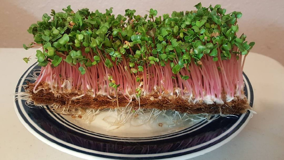 Microgreens Only Farm Share Starting At